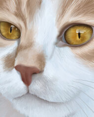 illustration-cat-05-detail