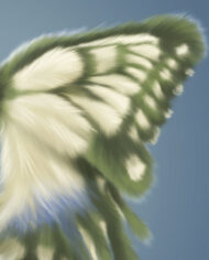 hairy-butterfly-detail