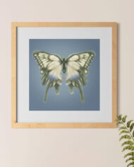 hairy-butterfly-frame